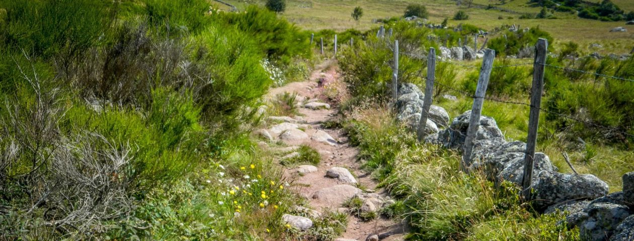 nature-path-grass-wilderness-hiking-trail-604426-pxhere.com